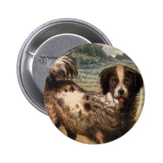 Brown juguetón y perro casero cabelludo poner crem pin