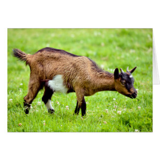 Brown juvenile goat on grass card