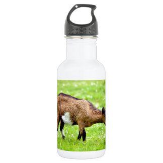 Brown juvenile goat on grass stainless steel water bottle