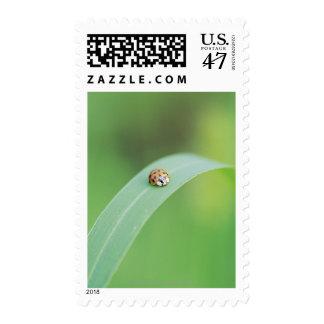 Brown ladybug stamp