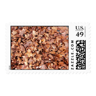 Brown leaves drying in a pile stamps