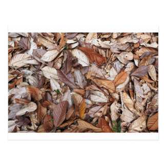 Brown leaves on forest floor postcard