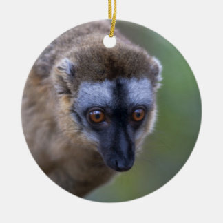 Brown lemur (Eulemur fulvus) in the forest 2 Double-Sided Ceramic Round Christmas Ornament