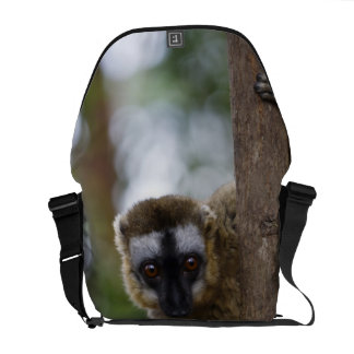 Brown lemur (Eulemur fulvus) in the forest 3 Courier Bag