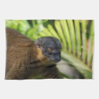 Brown Lemur Kitchen Towel