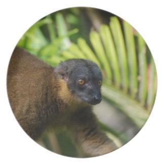 Brown Lemur Plate