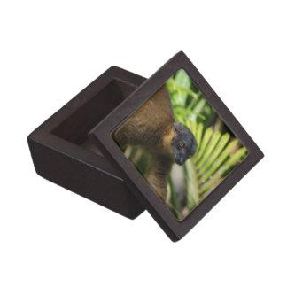Brown Lemur Premium Gift Box
