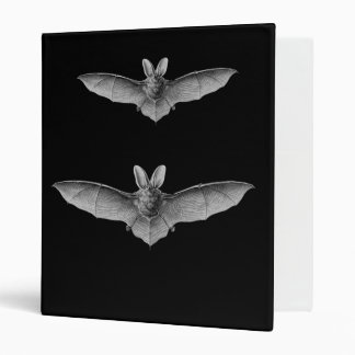 Brown & Lesser Long-eared bats Binder