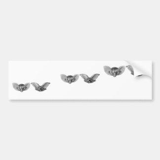 Brown & Lesser Long-eared bats Bumper Sticker