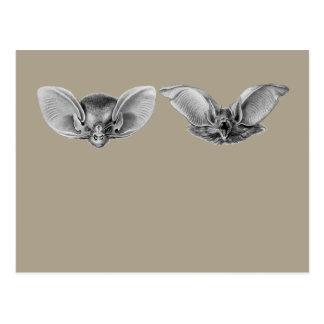 Brown & Lesser Long-eared Bats Postcard