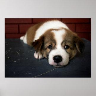 Brown lindo y perrito blanco póster