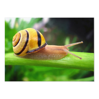 Brown Lipped Snail Cepaea Nemoralis Grove Snail Card