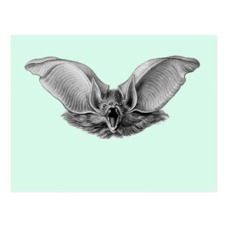 Brown Long-eared Bat Postcard