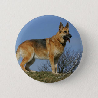 Brown Long Haired German Shepherd 2 Button