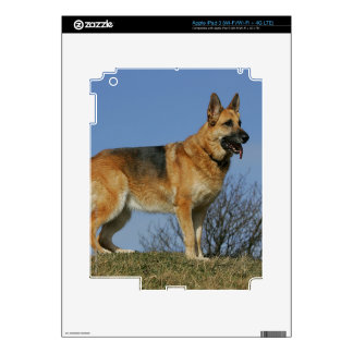 Brown Long Haired German Shepherd 2 Decal For iPad 3