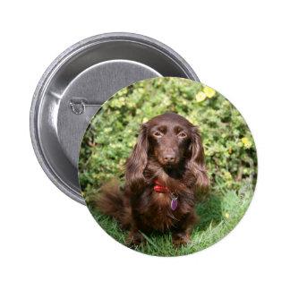 Brown Long-haired Miniature Dachshund Button