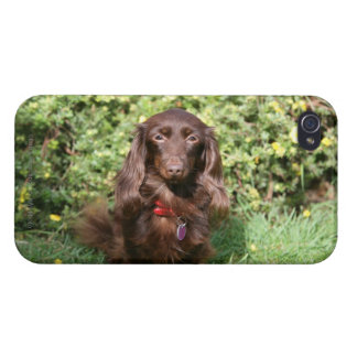 Brown Long-haired Miniature Dachshund Case For iPhone 4
