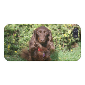 Brown Long-haired Miniature Dachshund Case For iPhone SE/5/5s