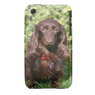 Brown Long-haired Miniature Dachshund iPhone 3 Cover