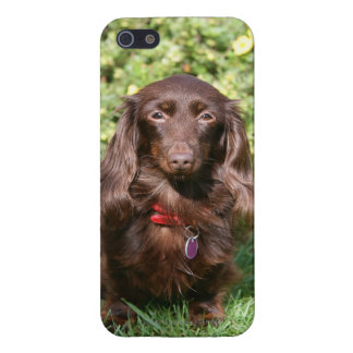 Brown Long-haired Miniature Dachshund iPhone SE/5/5s Cover