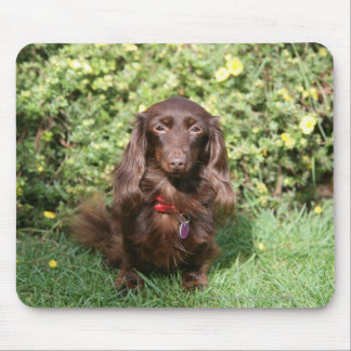 Brown Long-haired Miniature Dachshund Mouse Pad