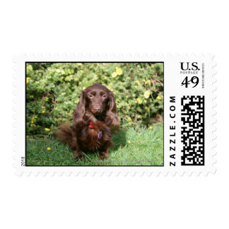 Brown Long-haired Miniature Dachshund Postage
