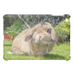 Brown lopped ear rabbit with lavender iPad mini cover