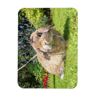 Brown lopped ear rabbit with lavender magnet
