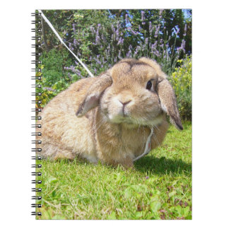 Brown lopped ear rabbit with lavender spiral note books