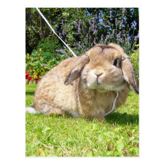 Brown lopped ear rabbit with lavender postcard