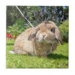 Brown lopped ear rabbit with lavender tiles