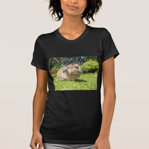 Brown lopped ear rabbit with lavender tshirts