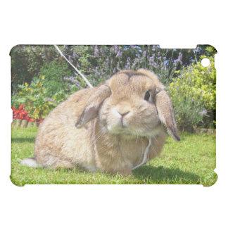 Brown lopped el conejo del oído con lavanda