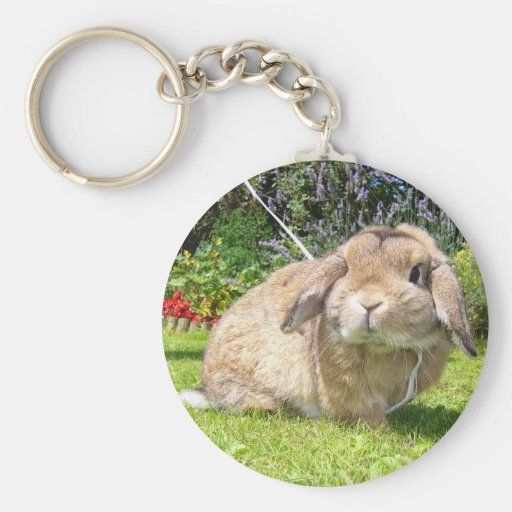 Brown lopped el conejo del oído con lavanda llaveros personalizados