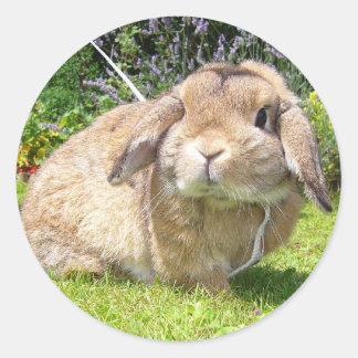 Brown lopped el conejo del oído con lavanda pegatinas redondas