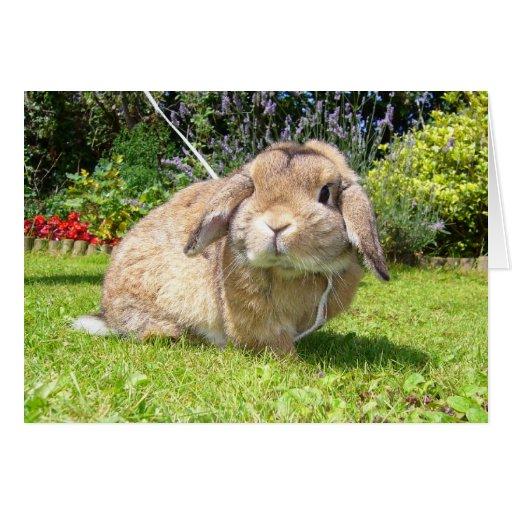 Brown lopped el conejo del oído con lavanda tarjeta pequeña
