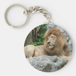 brown Male Lion with large mane Lays on Rock ledge Keychain