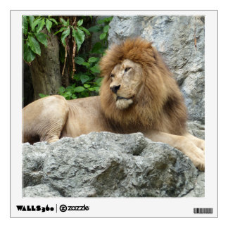 brown Male Lion with large mane Lays on Rock ledge Wall Decal