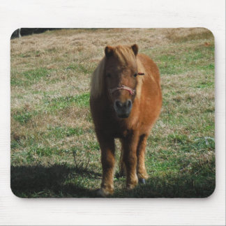 Brown miniature horse mouse pad