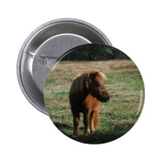 Brown Miniature Horses Pinback Button