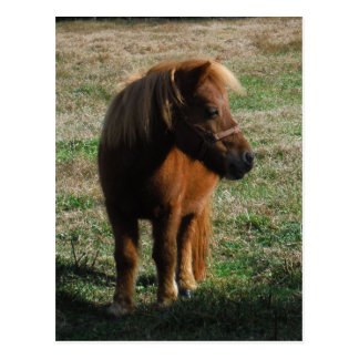 Brown Miniature Horses Post Cards