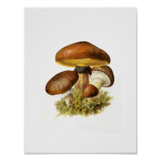 Brown Mushroom Print
