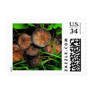 Brown Mushrooms Postage