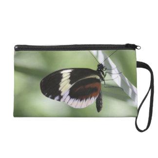 Brown negro y mariposa blanca