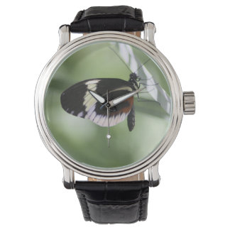 Brown negro y mariposa blanca reloj de mano