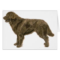 Brown Newfoundland Dog Card