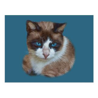 Brown observado azul y postal blanca del gato