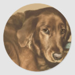 Brown observó el perro irlandés de oro pegatina redonda