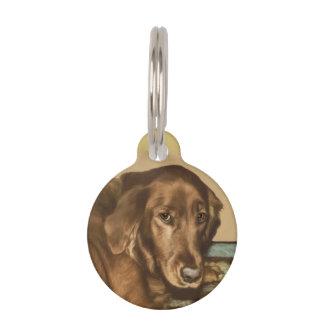 Brown observó el perro irlandés de oro identificador para mascota