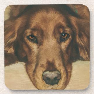 Brown observó el perro irlandés de oro posavasos de bebida